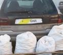 Dois detidos e cinco arguidos por furto de alfarroba em Armação de Pêra e Lagoa