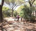 «Semana de Verão» estimula crianças acompanhadas no Centro de Desenvolvimento Pediátrico do CHUA
