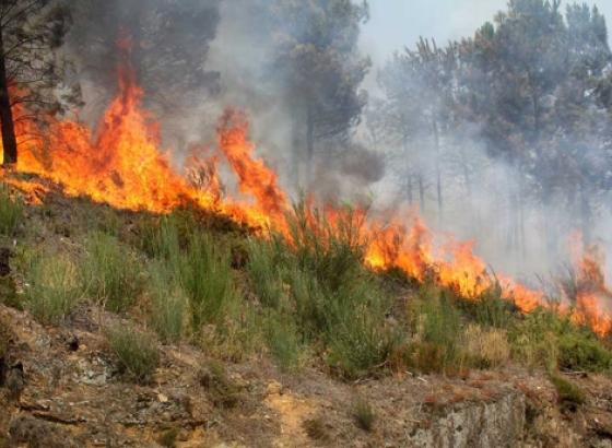 Incêndios: Proteção Civil faz aviso à população para risco máximo na quinta e sexta-feira