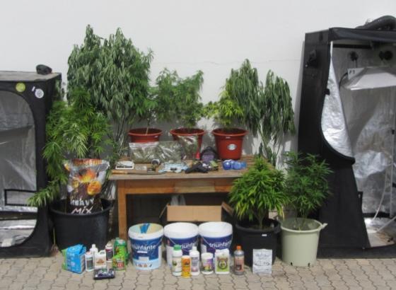 GNR desmantela estufas de secagem de cannabis em Castro Marim