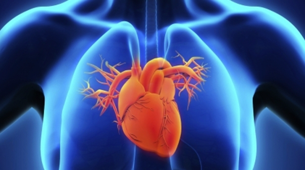 Japão desenvolve células capazes de regenerar miocárdio