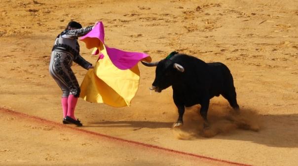 BE Albufeira apresenta recomendação pelo fim das touradas no concelho