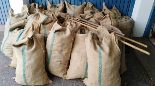 Detidos na posse de 594 quilos de alfarroba