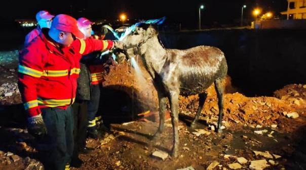 Burro atolado em lama resgatado com sucesso em Lagos