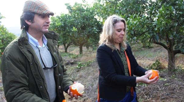 """Câmara de Silves cria """"centro comercial virtual"""" para apoiar economia local"""