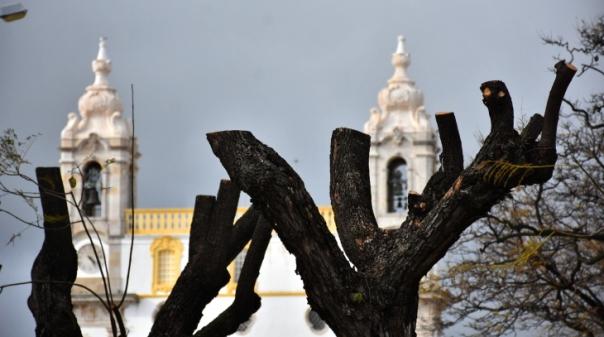 PAN defende georreferenciação para defender património arbóreo de Faro