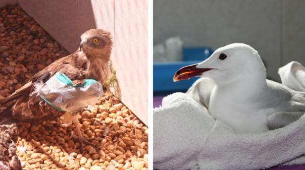 Balanço: Em 2020 RIAS devolveu à natureza 1382 animais