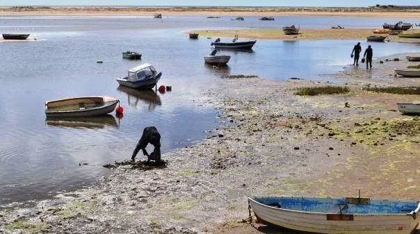 "PCP dedica ""jornada de contacto"" com mariscadores e viveiristas da Ria Formosa"