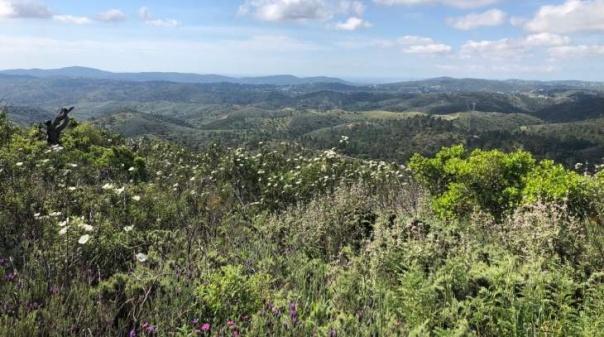 Município de São Brás de Alportel abre concurso público para trabalhos de silvicultura preventiva