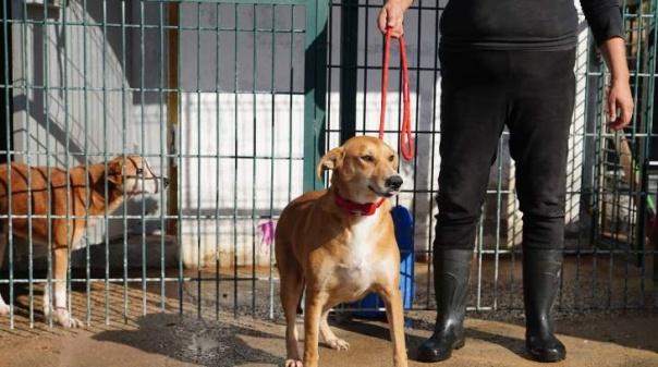 Olhão na lista dos concelhos que mais esterilizam animais
