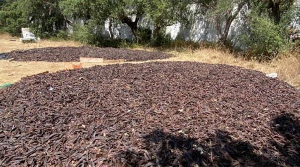 GNR de Loulé apreende 11 toneladas de alfarroba furtada e identifica 8 suspeitos