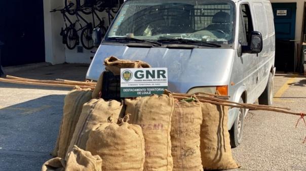 GNR faz nova apreensão de alfarroba no concelho de Loulé
