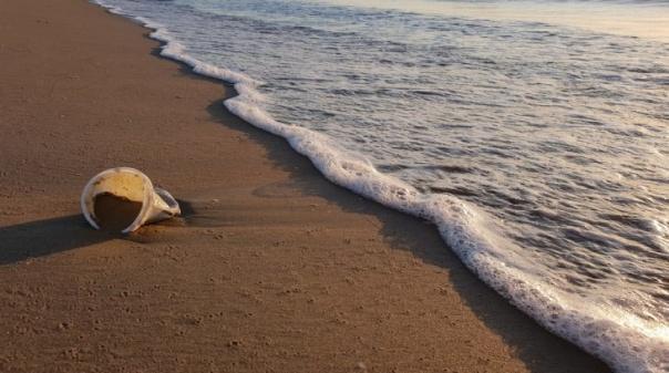 Município de Silves espera por si no Dia Internacional da Limpeza Costeira