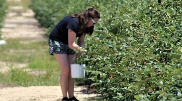 Movimento aplaude campanha alemã contra agricultura intensiva no Alentejo e Algarve
