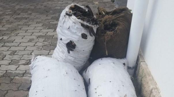 Apreendidos 120 quilos de alfarroba em Tavira